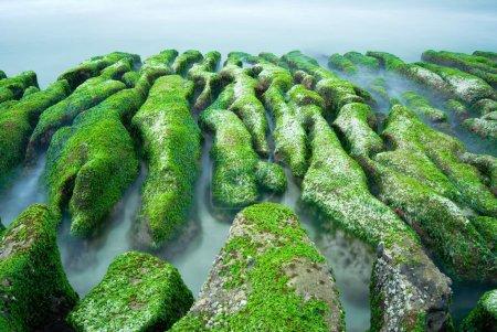 Green Rocky Seacoast