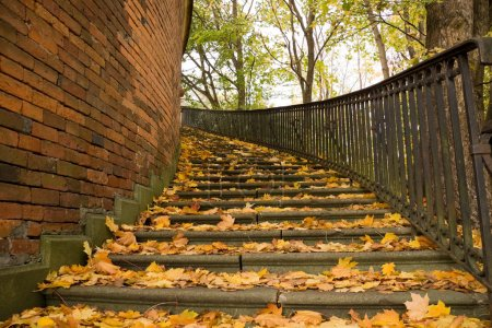 Photo pour Escaliers dans une poussette couverte de feuilles jaunes en automne - image libre de droit