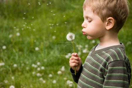 Small boy blowing dandelion