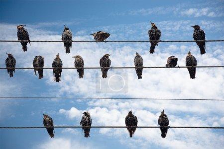 Photo pour Oiseaux sur un fil sur un fond de ciel bleu avec des nuages - image libre de droit