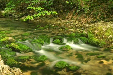 Photo pour La rivière coule sur les pierres couvertes par une mousse verte vif. - image libre de droit