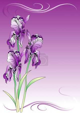 Illustration for Irises floral background - Royalty Free Image