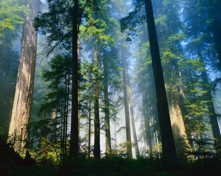Photo pour Vue paysage nature - image libre de droit