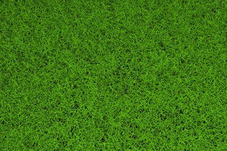 Photo pour Fond herbe verte haute résolution - image libre de droit