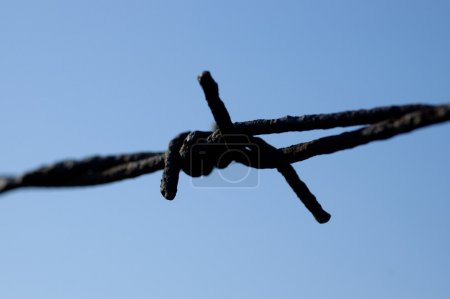 Blured barbed wire abstract macro