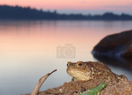 Princesse une grenouille