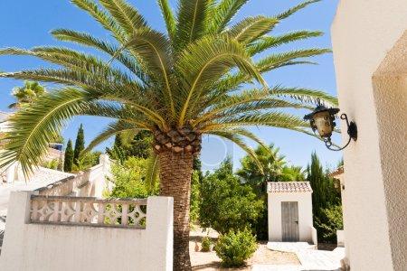 Photo pour Grand palmier - image libre de droit