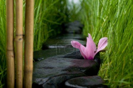 Photo pour Chemin de pierre abstrait entre une herbe (naturelle) .Fleur, pierres et herbe dans des gouttes d'eau . - image libre de droit