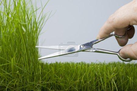 Mower & natural grass