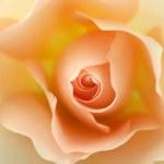 Beautiful beige rose in bloom...
