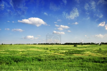 Photo for Meadow with green grass and blue sky with clouds - Royalty Free Image