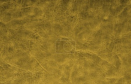 Photo for Leather textured background from skin of cow - Royalty Free Image