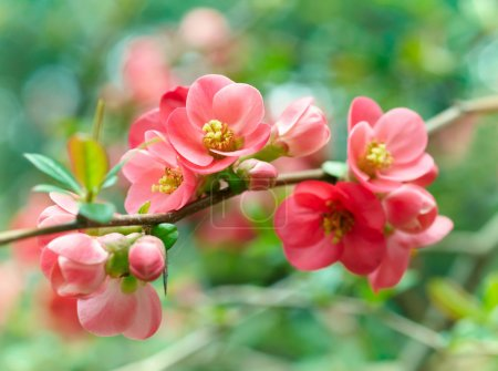 Photo pour Fleurs de printemps - image libre de droit