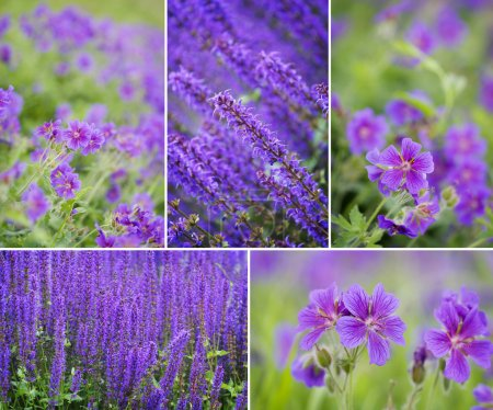 Photo for Collection of spring flowers - Royalty Free Image