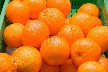 Photo pour Oranges fraîches - image libre de droit