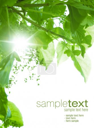 Photo for Sun beams shining thru green leaves. Space for text isolated on solid color. - Royalty Free Image