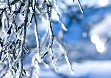 Frozen branch - ice