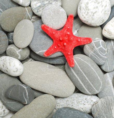 Photo pour Étoile de mer et les galets comme toile de fond - image libre de droit