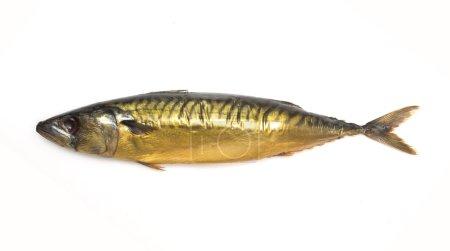 Smoked mackerel, golden color on a white backgroun...