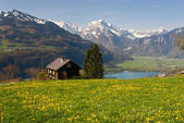 "Постер, картина, фотообои ""Альпийский луг весной"""