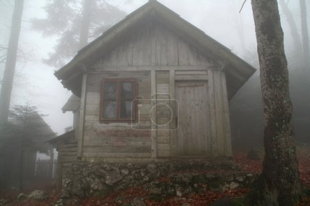 Forest cottage in the mist