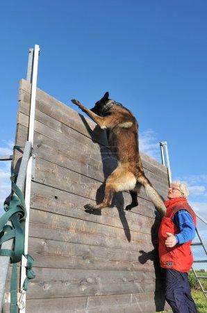 Training of police dog
