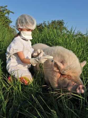 Photo pour Jeu d'enfants avec un porc et risque de grippe porcine - image libre de droit