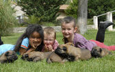 Children and puppies