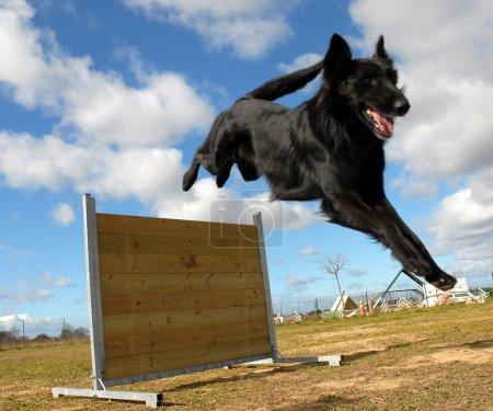 Jumping Groendal