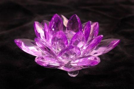 Crystal violet flower on a black velvet