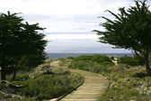 Boardwalk between Monterey cypress