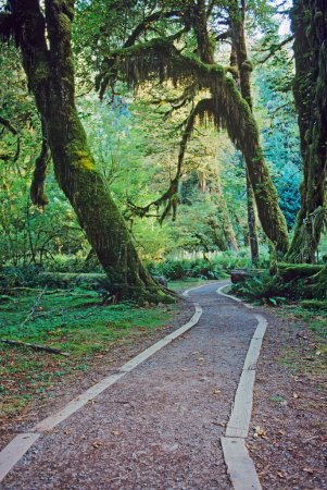 Walkway in Olympic National Park