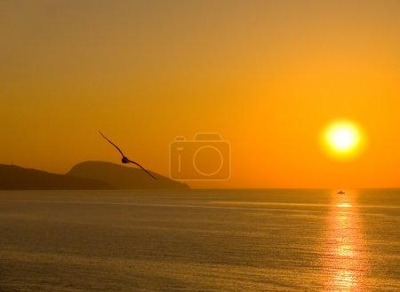 Photo pour Aube au-dessus de la mer. une silhouette de la mouette. le navire sur la voie solaire - image libre de droit