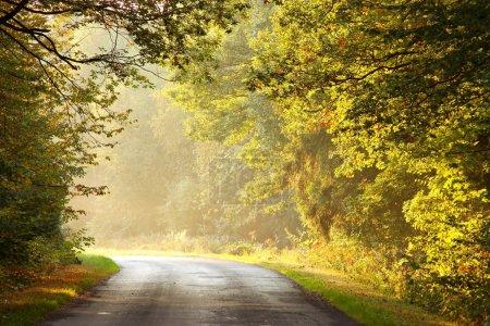 Photo pour Route menant à travers une forêt enchantée dans une matinée d'automne ensoleillée . - image libre de droit