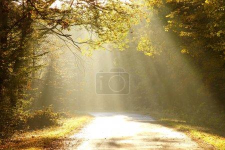 Photo pour Route menant à travers une forêt enchantée dans un matin d'automne ensoleillé. - image libre de droit