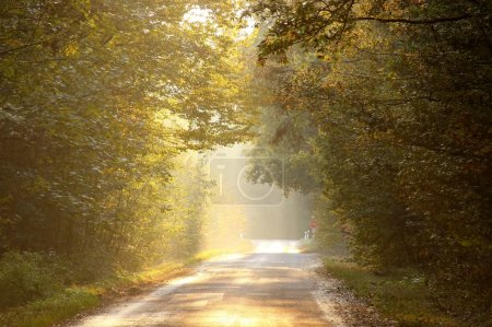 Photo for Last rays of the setting sun backlit autumn forest road. Photo taken in October. - Royalty Free Image