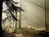 Late autumn coniferous forest at dawn