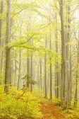Lesní stezka na horském svahu