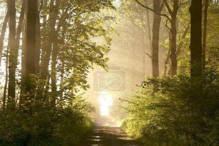 Spring forest lane