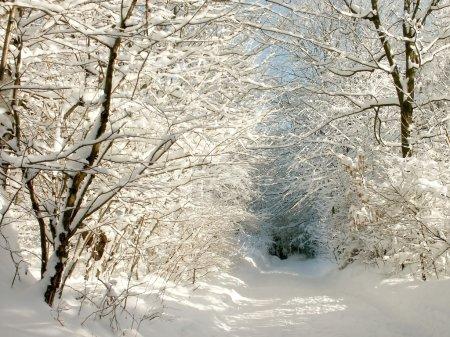 Photo pour Ruelle pittoresque hiver menant à travers les bois, un matin ensoleillé et givré. - image libre de droit