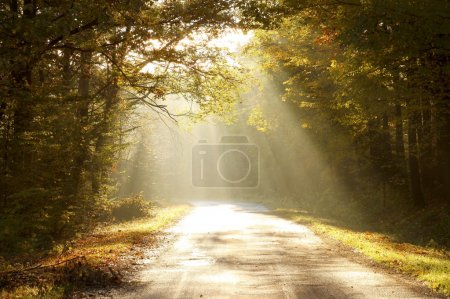 Photo for Autumn forest road illuminated by the light of the rising sun. - Royalty Free Image