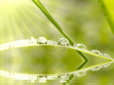 Photo for Rain drops on grass in the rays of the sun. - Royalty Free Image