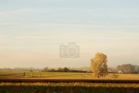 Sunset over the field with a golden tree