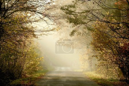 Photo for Country road leading through the misty forest in the rays of the setting sun. - Royalty Free Image