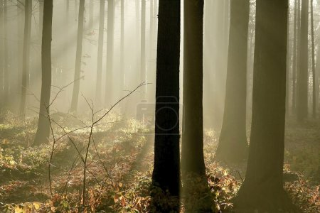 Mysterious forest at dawn
