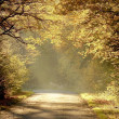 Country road through the autumn forest with oak tr...