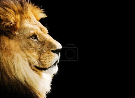The king of all animals portrait with copy space...