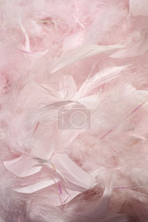 Photo for Fluffy pink feathers in sunlight textured background - Royalty Free Image