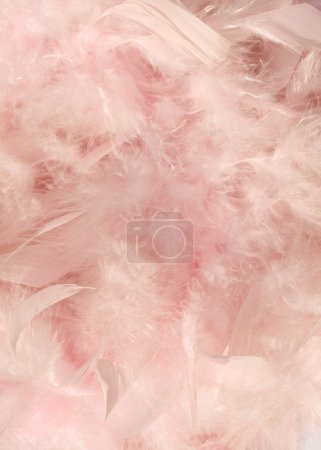Baby pink fluffy feather background
