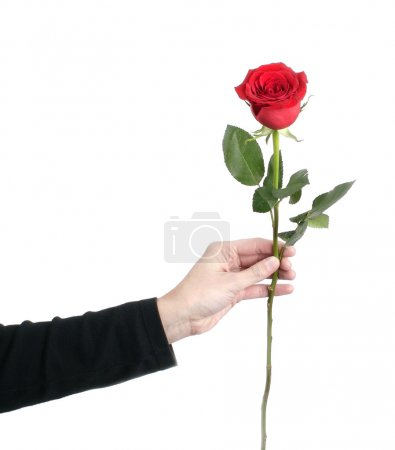 Red rose on woman's hand